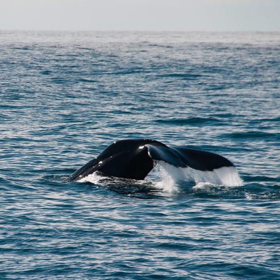walvis kaikoura