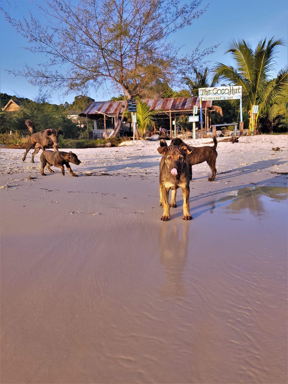 honden Coconut Beach Cambodja