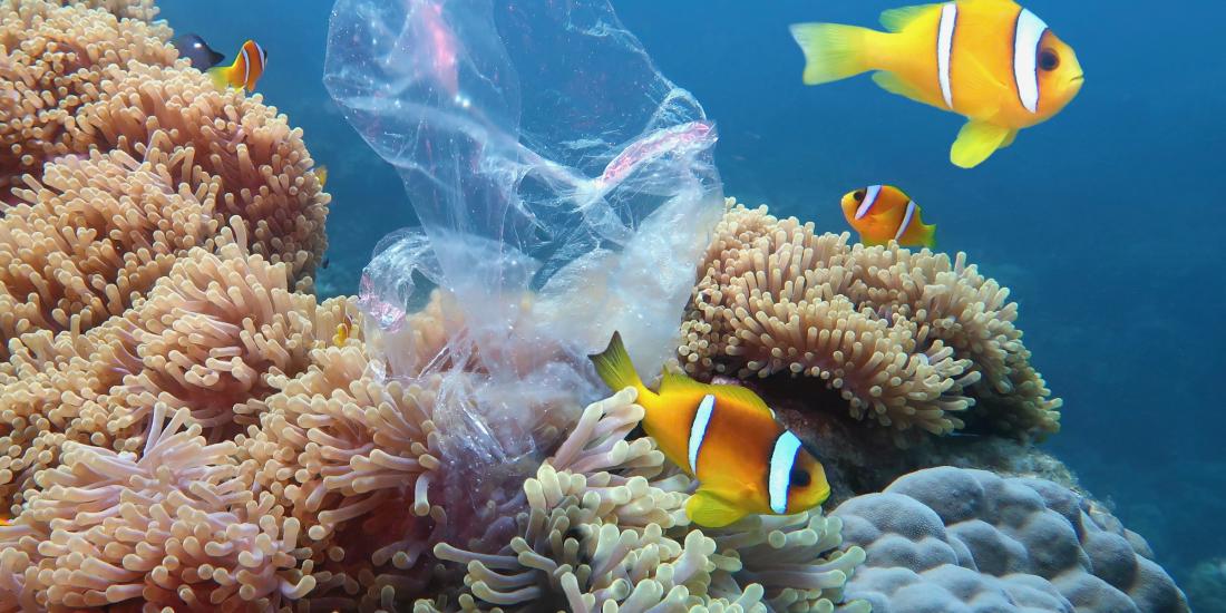 oceaan plasticvrij